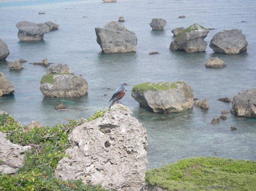 Blue_bird2