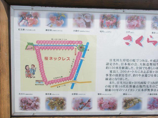 Sakuraringu_001