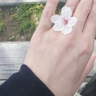 Sakuraringu_12